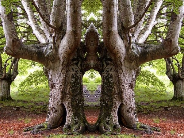 Les arbres  - Page 4 38656466