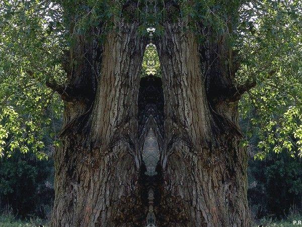 Les arbres  - Page 4 462c91c7