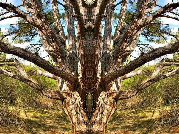 Les arbres  - Page 4 8091db54