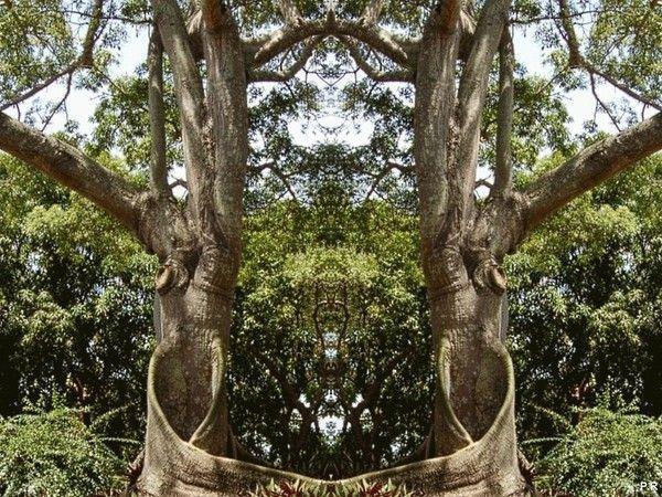Les arbres  - Page 4 89047d59