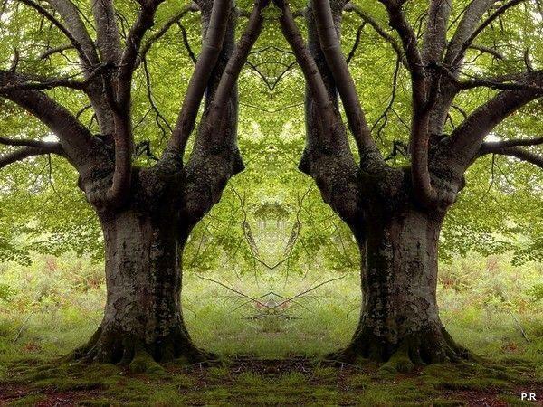 Les arbres  - Page 4 8b48a3d8