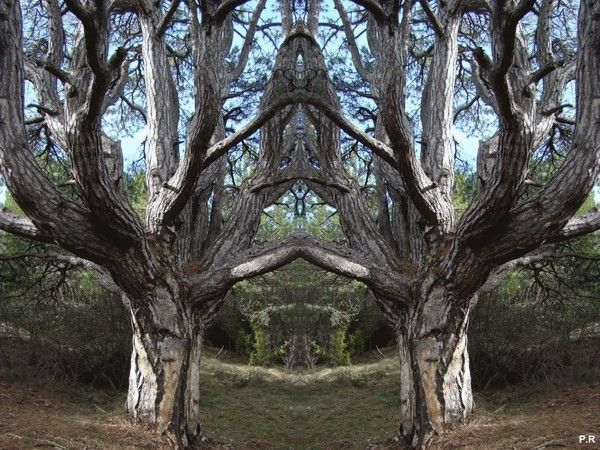 Les arbres  - Page 4 A5d67d6a