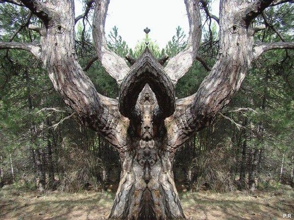 Les arbres  - Page 4 Cadda27c