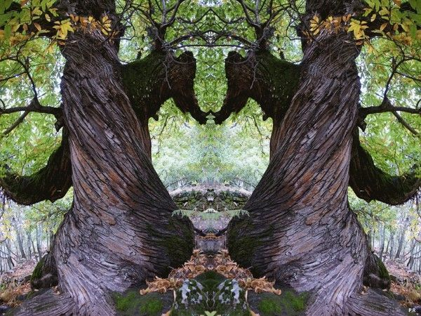 Les arbres  - Page 4 Db31b1cb
